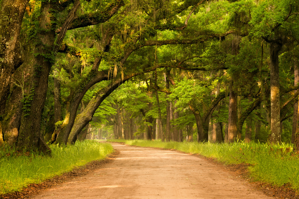 Botany Bay Road South Carolina