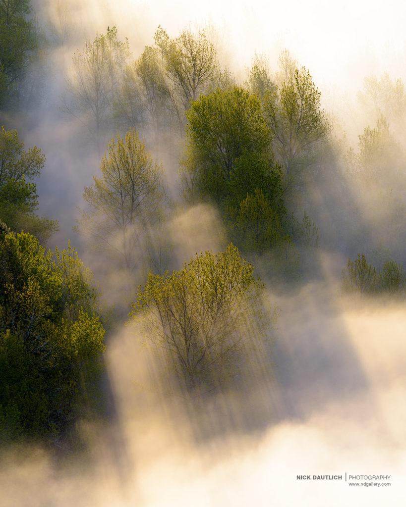 trees-mist