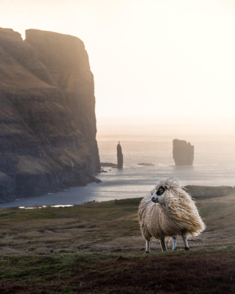 Faroe-Islands-5