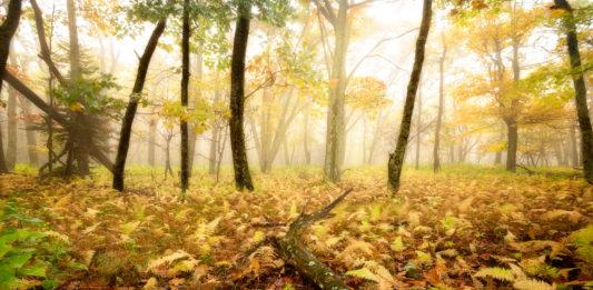 Autumn Photography Tips