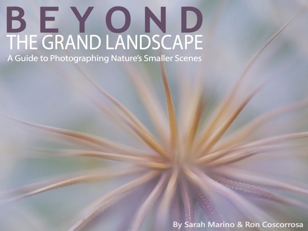 Beyond the Grand Landscape eBook