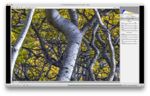 Ultimate Sharpening Workflow for Fine Art Printing