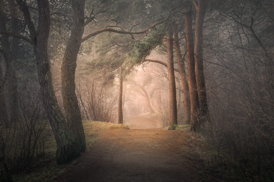 Photograph Trees and Woods