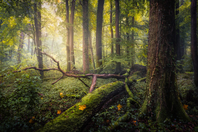 Photographing Trees and Forests
