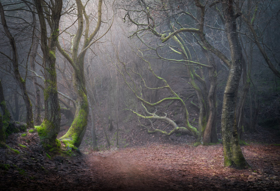 How to Photograph Woods