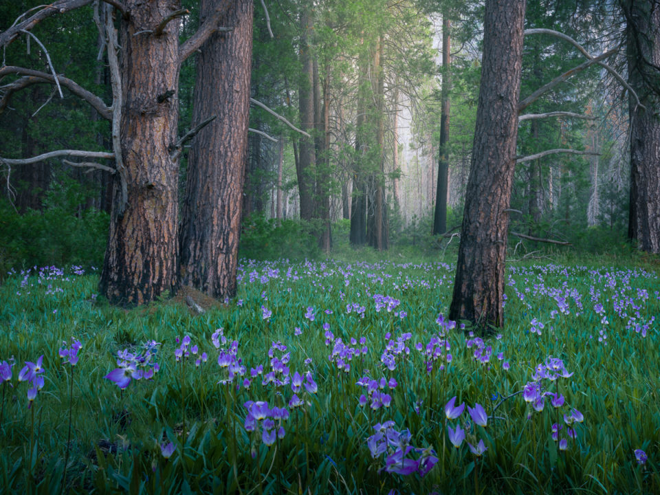 How to Photograph Trees and Forests