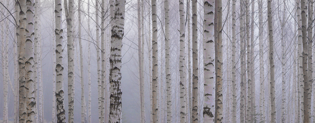 Photographing forests and trees