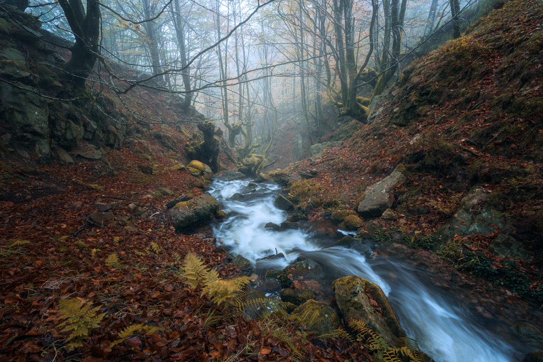 Tips for Autumn Photography