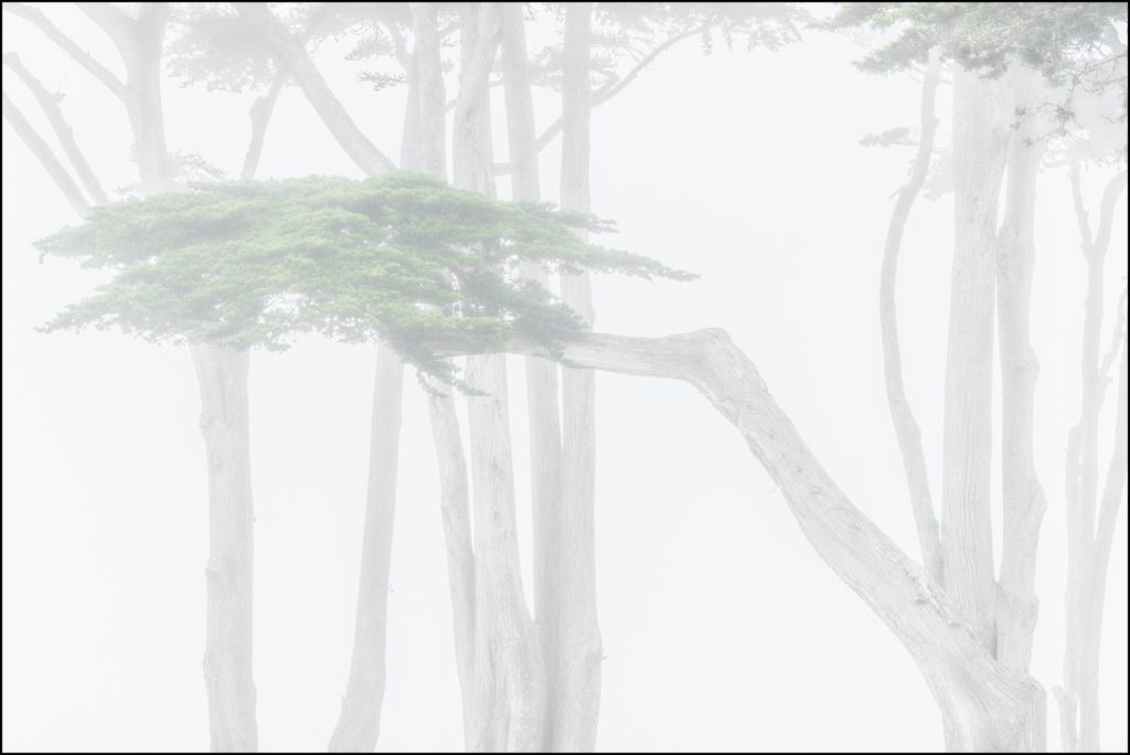 Cypress trees in fog, Monterey, California 2019 William Neill