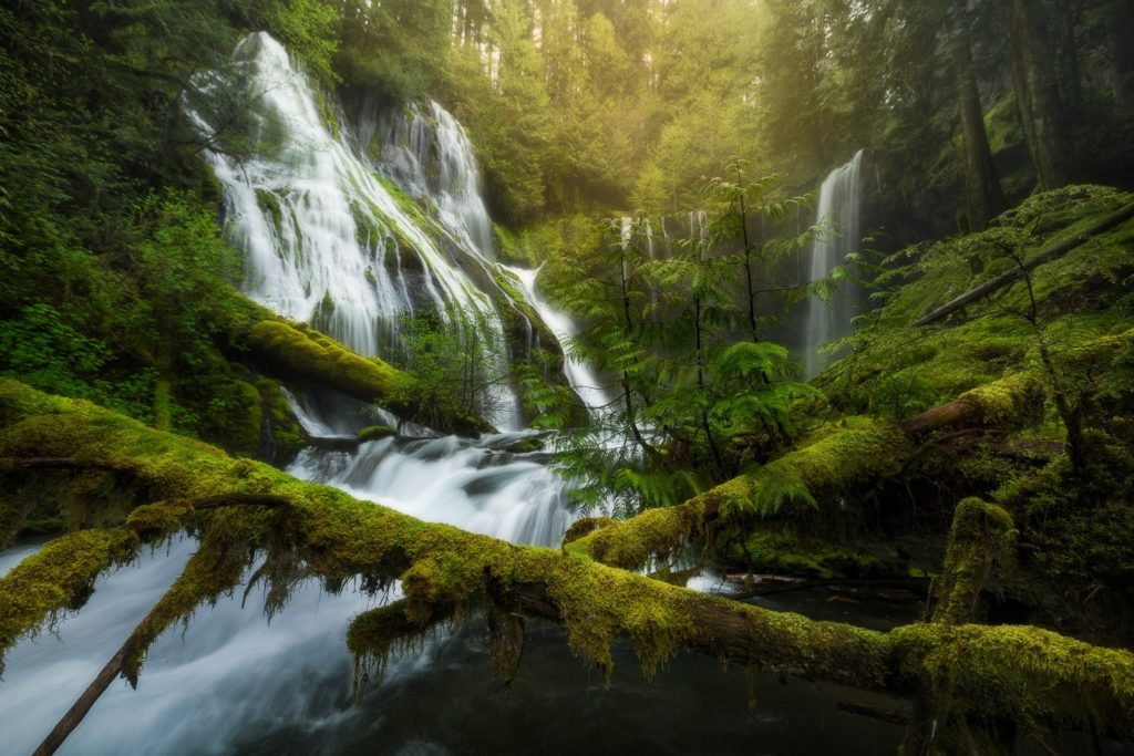 Photographer of the Month Majeed Badizadegan