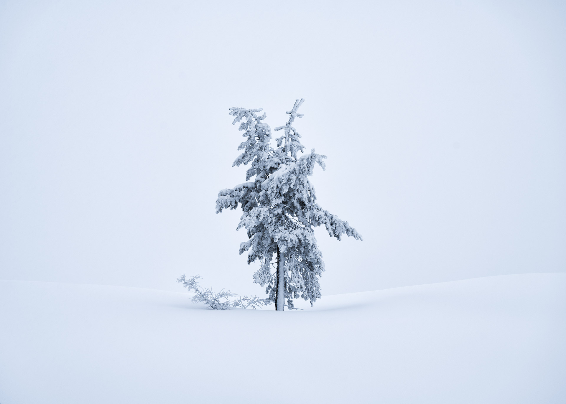 Tree in snowstorm - scouting pays off